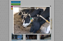 "Сайт визитка компании ""Молочная академия"""