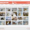 Разработка дизайн сайта с фотогалеррей